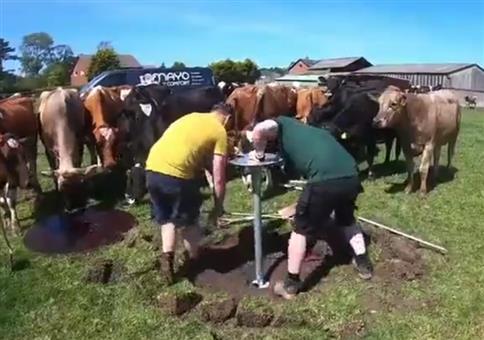 Die Kühe lieben es