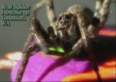 Gruselige Spinnen - Best of