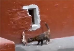 Die Katze und der sehr große Fisch