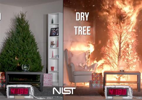Brennende Weihnachtsbäume: Gewässert VS trocken