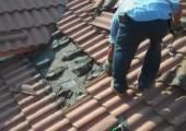 Fledermausnest auf dem Dach
