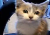 Best of Katzen Clips