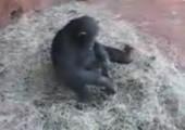 Affe vergnügt sich mit Frosch