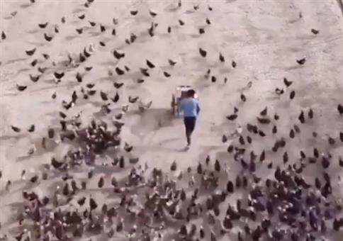 Kunst mit Tauben