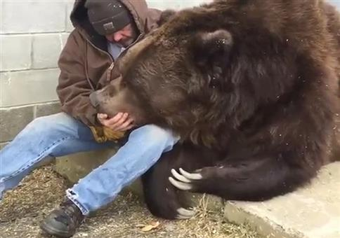Einen Bären trösten