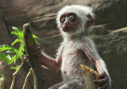 Affen trauern um toten Fake-Affen