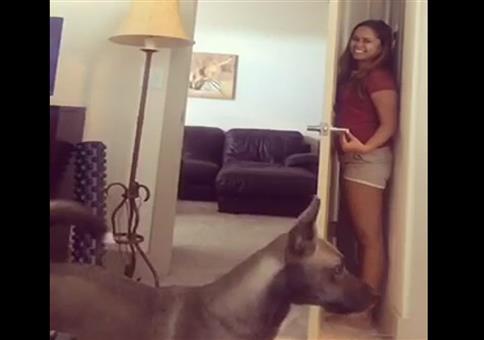 Sie hat das ideale Versteck vor dem Hund gefunden
