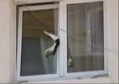 Katze hängt im Fenster fest