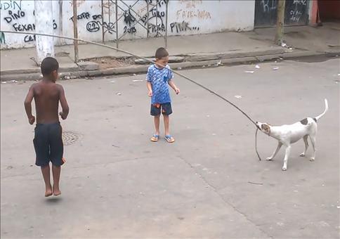 Hund beim Seilspringen