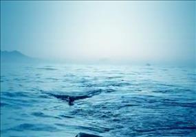 Krasse Hai-Attacke