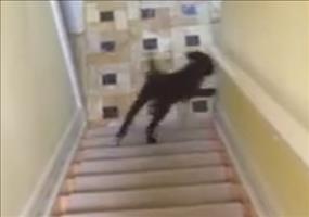Hund gleitet die Treppe runter