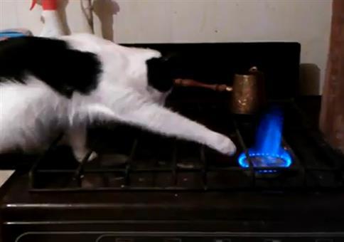 Katze vs. Herdflamme