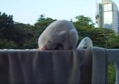 Katze mit merkwürdiger Schlafhaltung