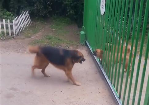 Bellende Hund am Zaun