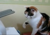 Katze vs. Drucker