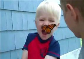 Gefährliche Schmetterlingsattacke