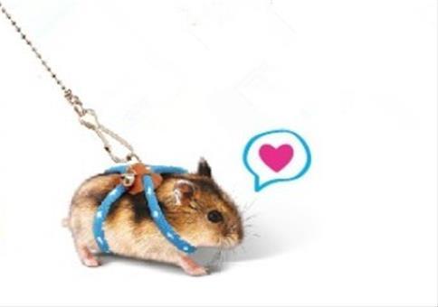 Endlich mit dem Hamster Gassi gehen
