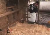 Schweinefutter Unfall