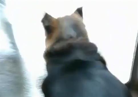 Hundi möchte so schnell wie möglich in den Garten