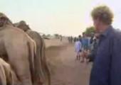 Über Kamele springen