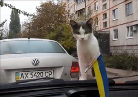 Katzen vs. Scheibenwischer