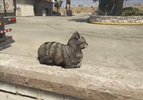 Keine gute Idee: In GTA V eine Katze erschrecken