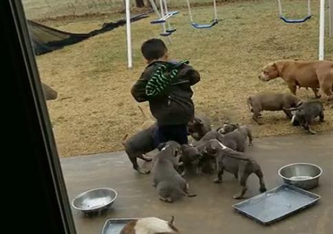 Organisierte Hundebande überfällt Kleinkind