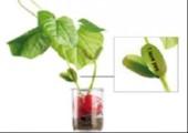 Geschenktipp zum Valentinstag: Pflanze mit Liebesbotschaft