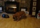 Hund verfolgt seinen eigenen Schatten