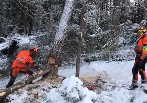 Baumfällen mit Rutschtechnik