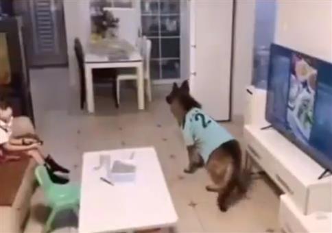 Guter Hund - Achtung Papa kommt