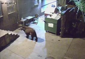 Der Bär und die Mülltonne