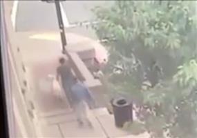 Hund rettet zwei Fußgängern das Leben