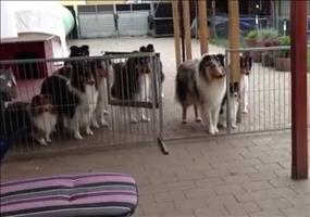 Hunde werden zum Essen einzeln aufgerufen