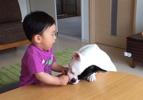 Fieser Hund klaut armen Kind den Reis Cracker