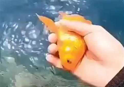 Der Fisch will zurück