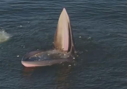 Wenn der Wal das Maul aufmacht