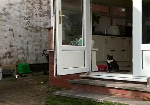 Unfähige Katze bewacht das Haus