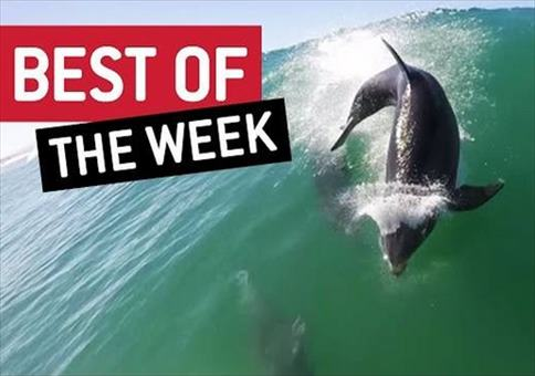 Best Videos - Woche 2 September 2015 Compilation