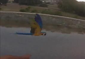 Mit dem Papagei Gasse fliegen