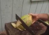 Kokosnuss aufschneiden in Trinidad und auf Hawaii