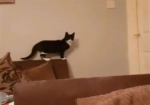 Die Katzen sagt mal eben Hi!