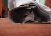 Katze versteckt sich in Zeitung