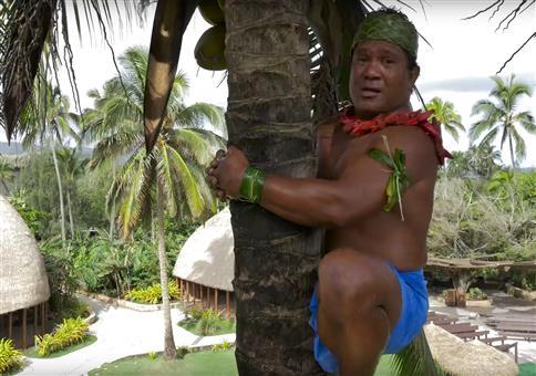 Wie klettert man richtig auf eine Palme?