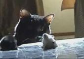 Katze vs. Mäuselöcher