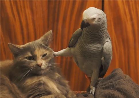 Papagei ärgert Katze