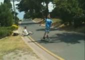 Mit dem Skateboard ab in die Hecke