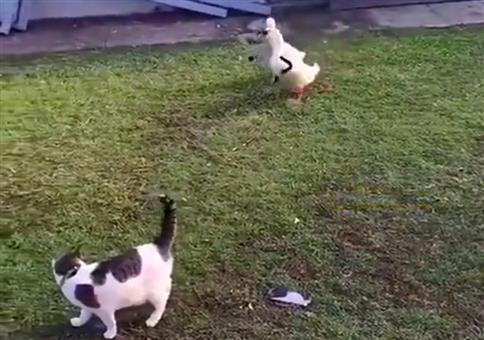 Spy Ducks