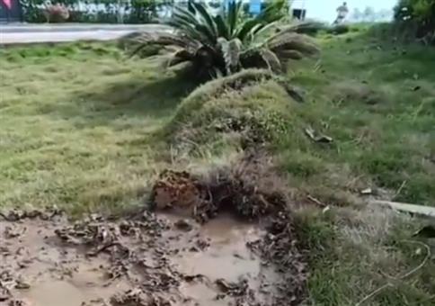 Wenn der Boden Durchfall hat