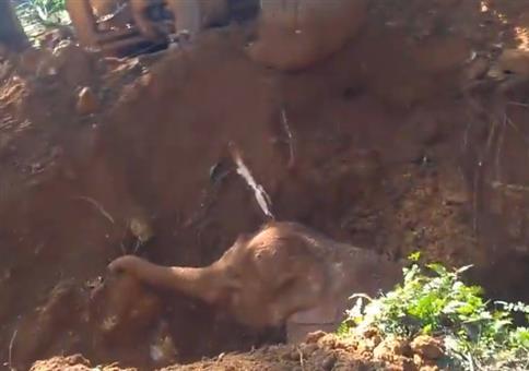 Baby-Elefanten retten und Dank der Eltern erhalten